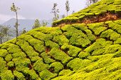 stock photo of darjeeling  - Plush Slopes of Hills Covered with Tea Plantations in Munnar - JPG