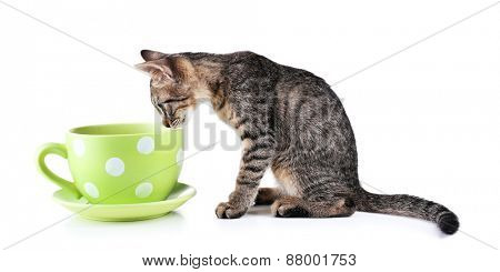 Cute kitten with cup isolated on white