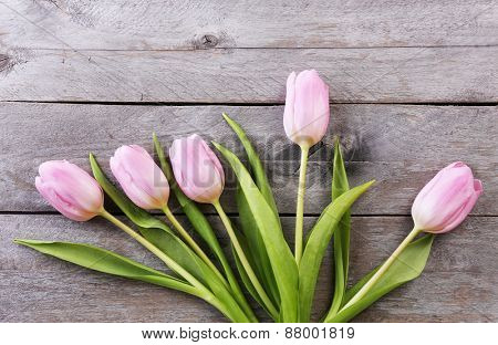 Beautiful pink tulips on wooden planks background