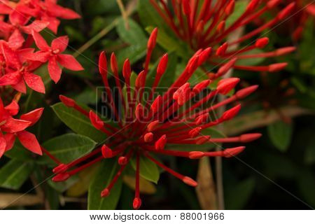 Beautiful of Red flower spike
