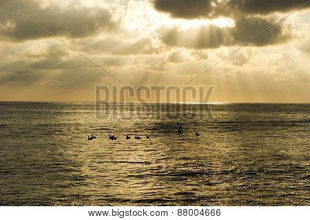 Cloud Sun Rays Ocean Birds