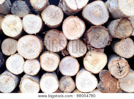 Wood Logs Or Firewood