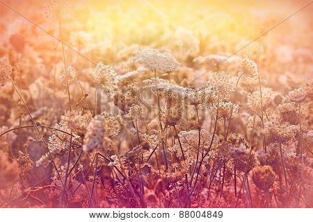 Meadow full of flowers  - sunset in meadow