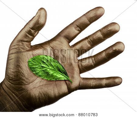 Human Hand With Green Leaf Isolated On White Background