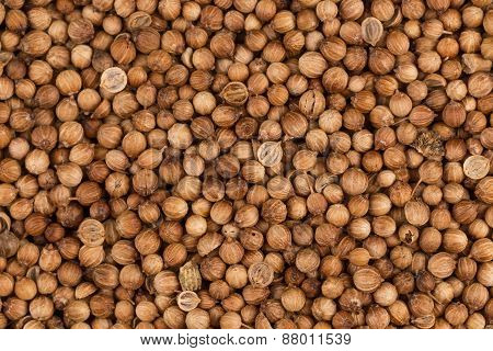 Close Up Of Dried Coriander Seeds