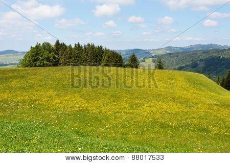 Appenzell grass fields