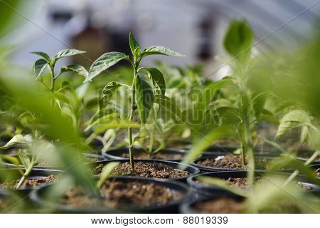 Small Plant Sapling Closeup
