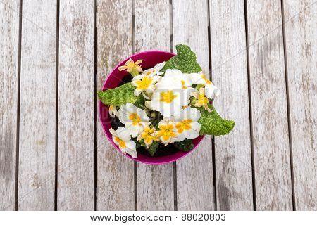 Spring Pansies On Table