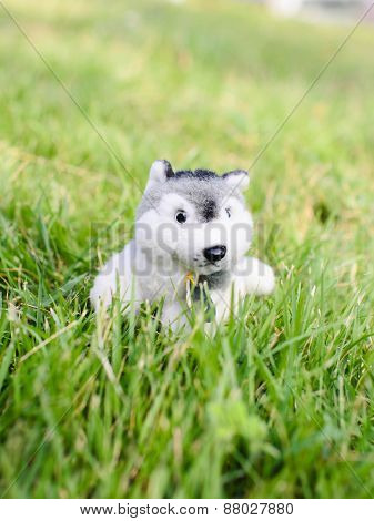 Cute Puppy Doll On Green Grass Outdoor.