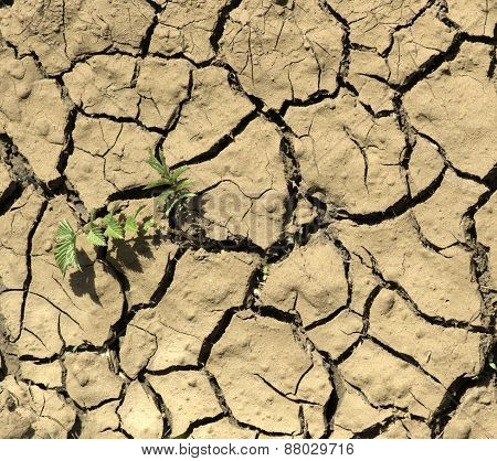 Plant Growing From A Crack In Otherwise Dry Mud