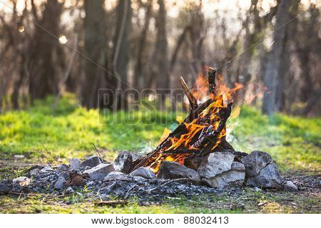 Bonfire In The Spring Forest. Coals Of Fire