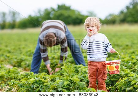 Father And Little Son On Organic Strawberry Farm