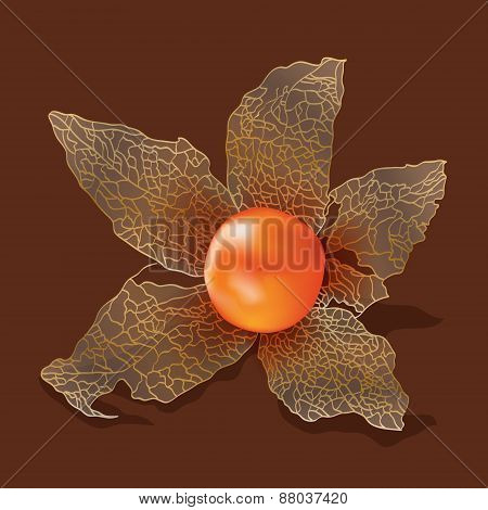 Physalis isolated from the background