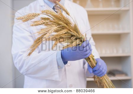 Scientist holding sheaf in the laboratory