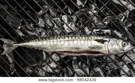 Grilling Mackerel