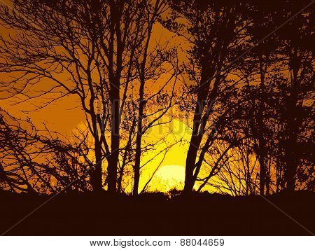 trees silhouetted by brilliant sunset