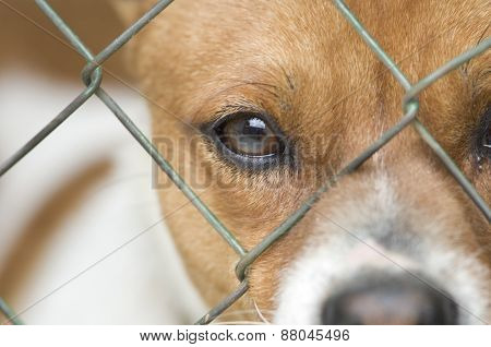 Dog Behind Wire Mesh