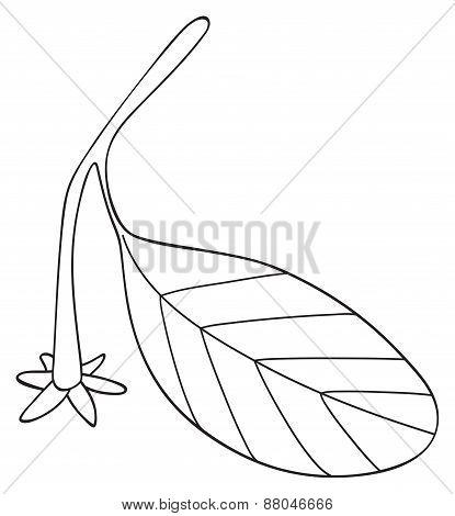 Shadeful Forest - Leaf Of An Orange