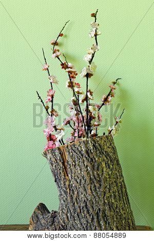 flowering branches of cherry (sakura) grow out of an old tree (revival)