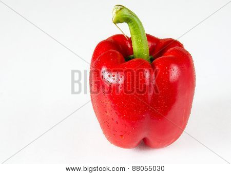 Red Bell Pepper With Water Droplets In White Background