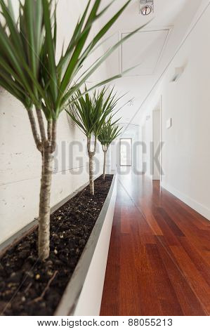 White Corridor In House