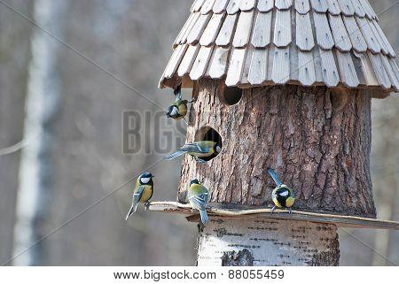 Bird feeder and five birds