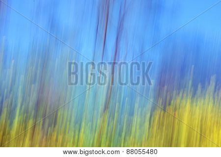 Yellow Flowers Blur Spring Landscape