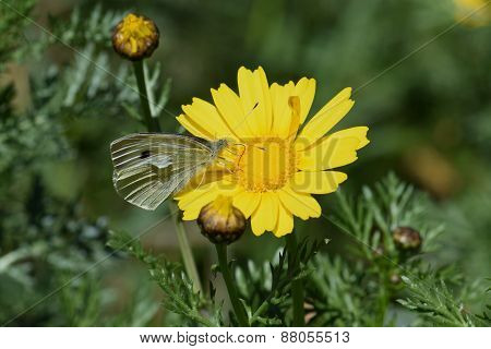 Butterfly On Yellow Flower Springtime Nature