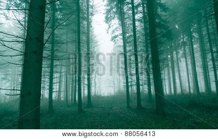 Fantasy Forest With Fog In Green