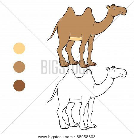Coloring Book (camel)