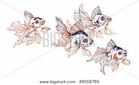 School Of Gold Fish On White Background Vector