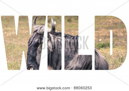 Word Wild Over Animals.