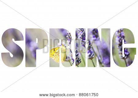 Word Spring Over Lavender Plant.