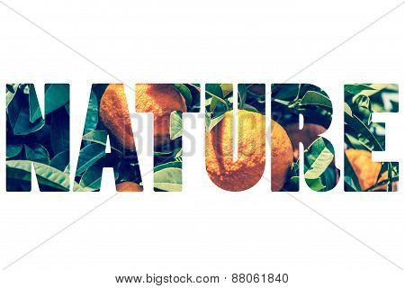 Word Nature Over Orange Fruit.