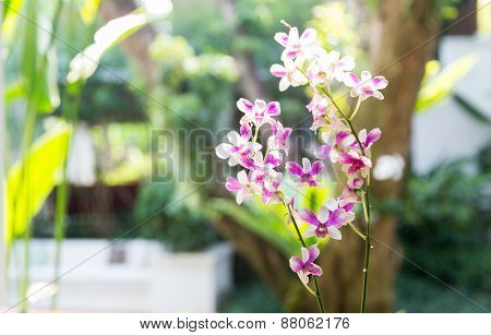 gardening, botany and flora concept - beautiful orchid flowers at garden