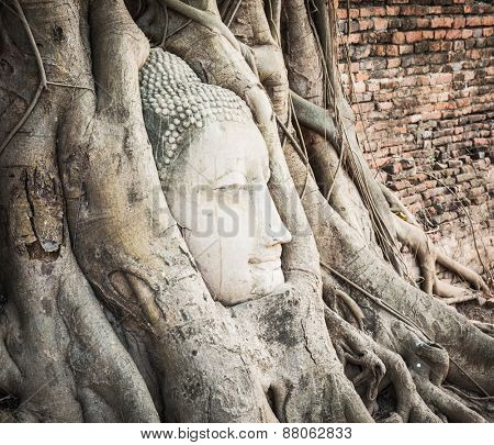 Buddha head overgrown by fig tree in Wat Mahatat. Ayutthaya historical park