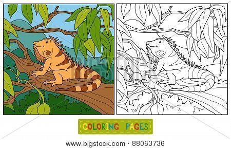 Coloring Book (iguana)
