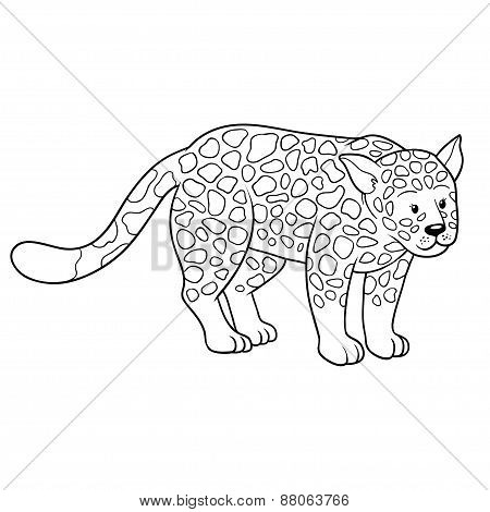 Coloring Book (undomestic cat)