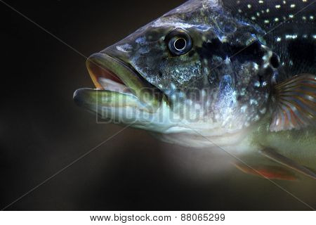 Fish On A Dark Background