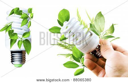 Fluorescent Bulb With Various Green Leaves In A Hand