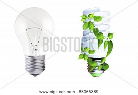 Incandescent Lamp And Fluorescent Lamp With Green Foliage