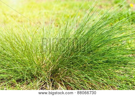 Green Grass On A Glade In Sun Beams