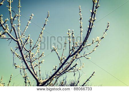 Cherry Blossom In Retro Style