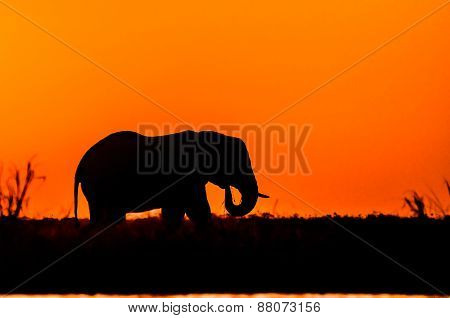 Silhouette Of An Elephant