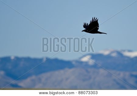Black Common Raven And Snow Covered Mountains