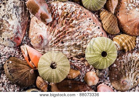 Up Close View Of A Mix Of Seashells