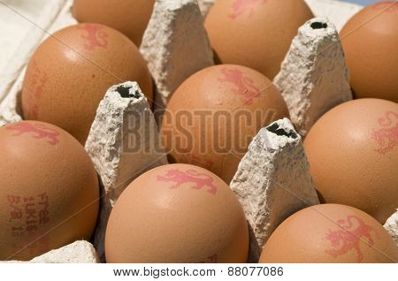 Eggs in egg box