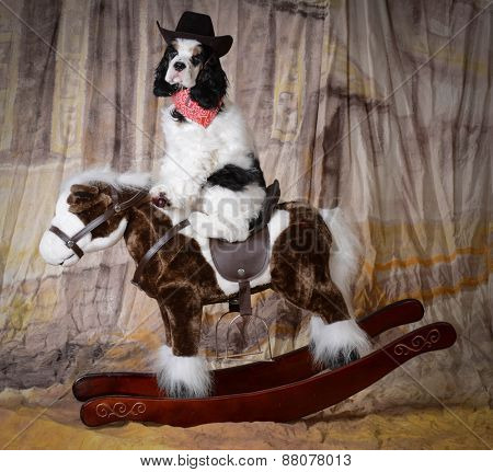 dog riding a rocking horse - american cocker spaniel puppy
