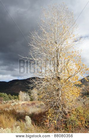 Fall Foliage In The Sangre De Cristo Mountains, New Mexico
