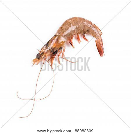 Raw tiger shrimp.